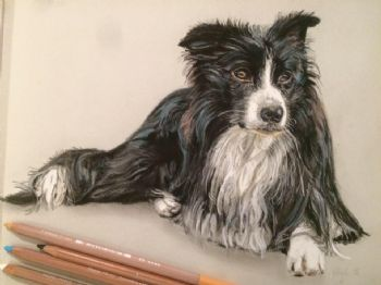 Pastel Print Collie Dog